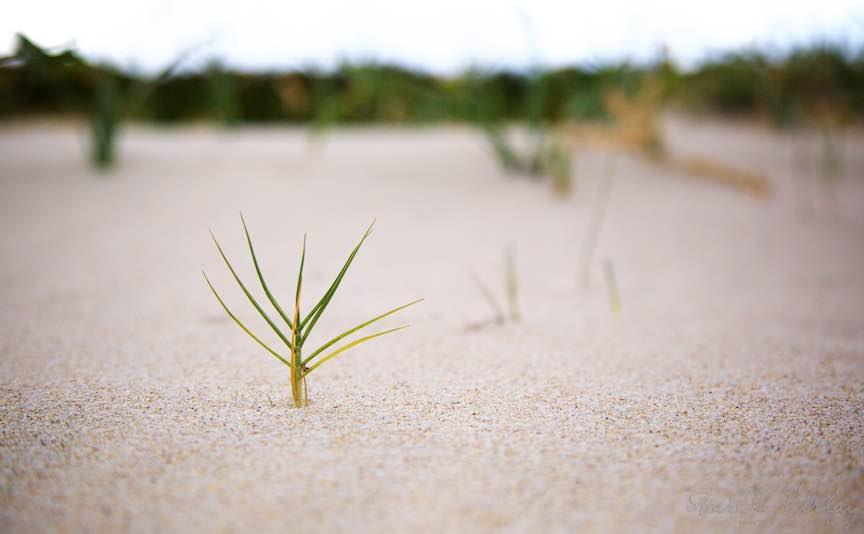 Singuratatea unei plante pe plaja din Costa Rei - Macrofotografie.