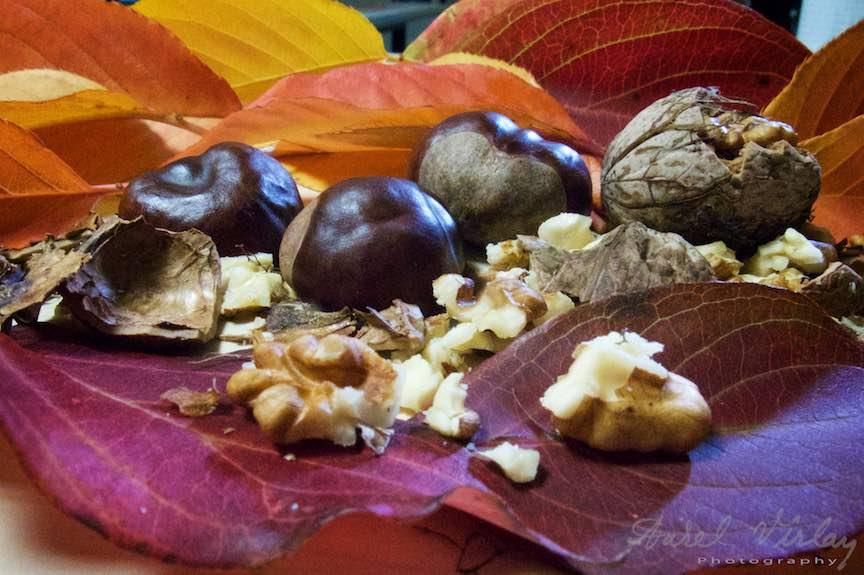 Toamna-Frunze-galbene-ruginii_Autumn-leaves_Foto_AurelVirlan Castane si nuci pe covor de frunze galbene: Macro-fotografie.