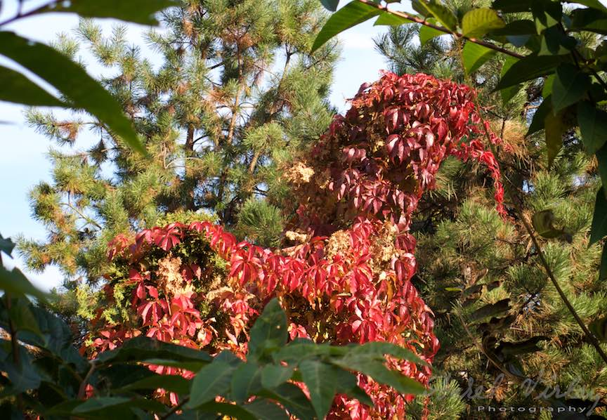 Toamna-Frunze-galbene-ruginii_Autumn-leaves_Foto_AurelVirlan-Emails14