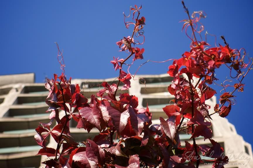 Toamna-Frunze-galbene-ruginii_Autumn-leaves_Foto_AurelVirlan-Emails15