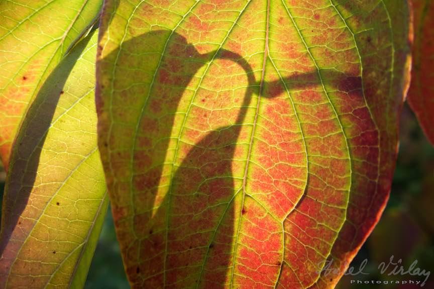 Toamna-Frunze-galbene-ruginii_Autumn-leaves_Foto_AurelVirlan-Emails34