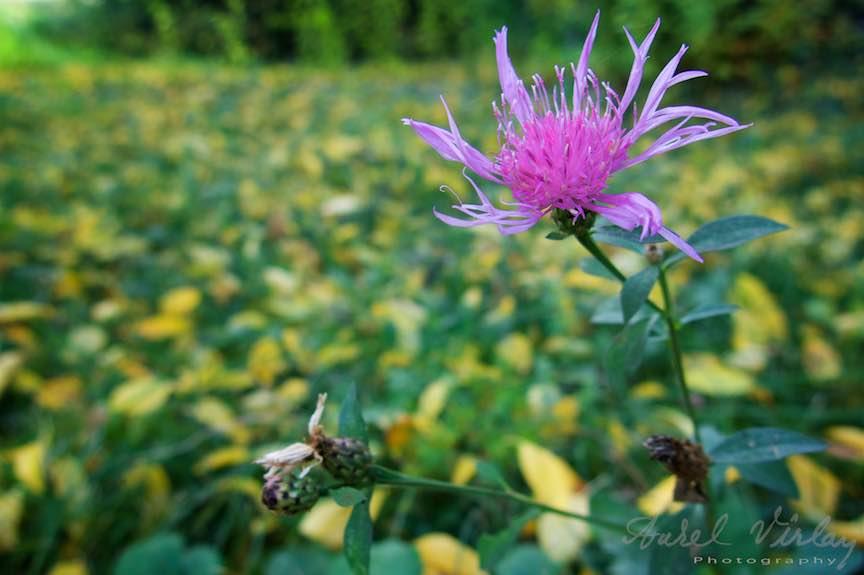 Toamna-Frunze-galbene-ruginii_Autumn-leaves_Foto_AurelVirlan-Emails42
