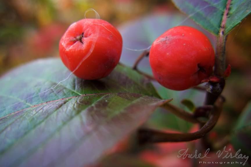 Toamna-Frunze-galbene-ruginii_Autumn-leaves_Foto_AurelVirlan-Emails59