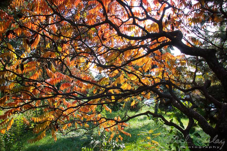 Toamna-Frunze-galbene-ruginii_Autumn-leaves_Foto_AurelVirlan-Emails61