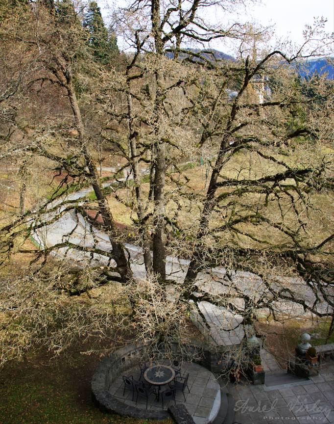 14-Castelul-Peles-vazut-prin-copacul-batran-si-Masa-Tacerii-terasa-Economat-Sinaia-Foto-Aurel_varlan