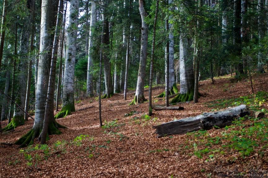 19-Toamna-Padure-Sinaia-frunze-ruginii-muschi-verde-copaci-FotoAurelVirlan