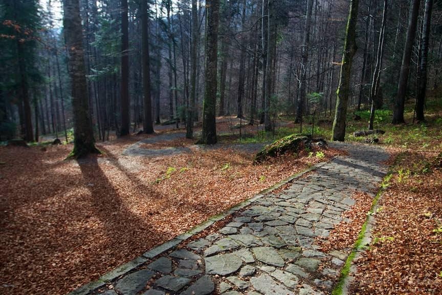 23a-Toamna-Padure-lumina-umbre-copaci-Sinaia-Peles-FotoAurelVirlan-Emails26