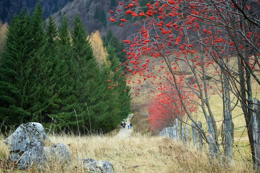 28-Toamna-arbusti-capacei-poame-rosii-turisti-padure-munte-FotoAurelVirlan