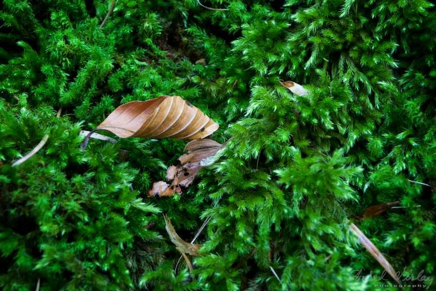 37-Detaliu-frunza-uscata-muschi-verde-Toamna-Padure-Sinaia-Peles-FotoAurelVirlan-Emails51