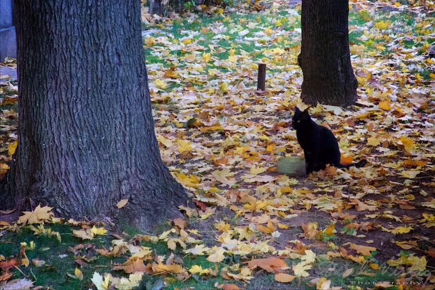 Toamna-cerul-rosu-copacii-galbeni-ruginii_Autumn-leaves_Foto_AurelVirlan-Emails25a