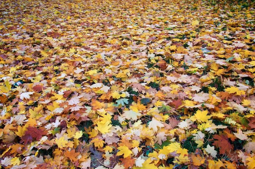 Toamna-cerul-rosu-copacii-galbeni-ruginii_Autumn-leaves_Foto_AurelVirlan-Emails30