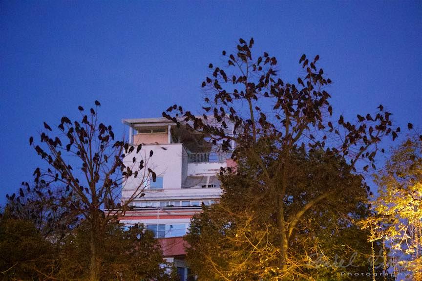 Toamna-cerul-rosu-copacii-galbeni-ruginii_Autumn-leaves_Foto_AurelVirlan-Emails33