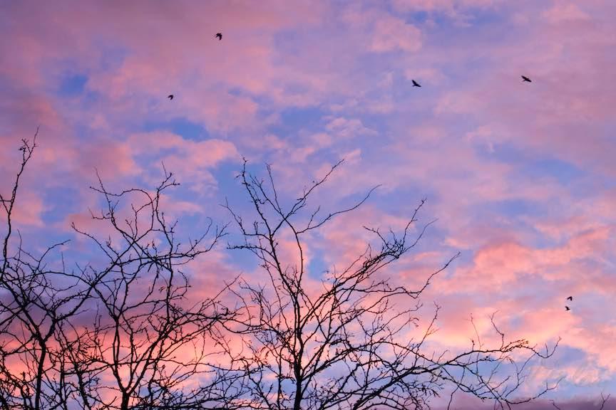 Toamna-cerul-rosu-copacii-galbeni-ruginii_Autumn-leaves_Foto_AurelVirlan-Emails45