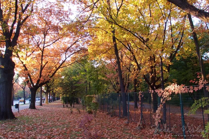 Toamna-cerul-rosu-copacii-galbeni-ruginii_Autumn-leaves_Foto_AurelVirlan-Emails7