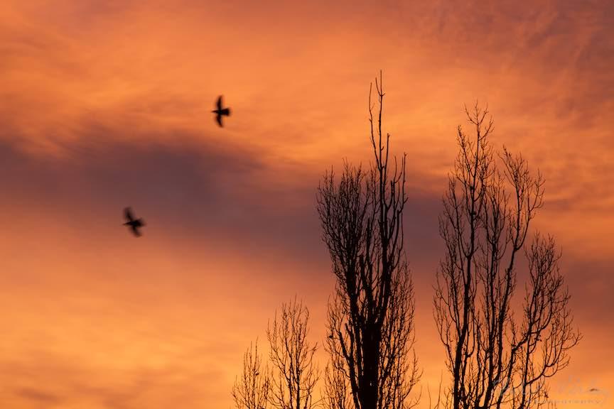Rasarit-Soare-cerul-rosu_Foto-AurelVirlan-Emails15