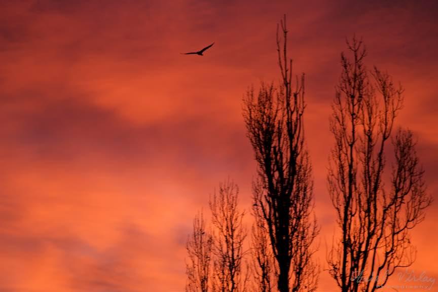 Rasarit-Soare-cerul-rosu_Foto-AurelVirlan-Emails4