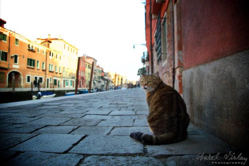 Venetia-Italia-Strazi-cladiri-vechi-canale-gondolieri-FotografAurelVirlan-Emails36
