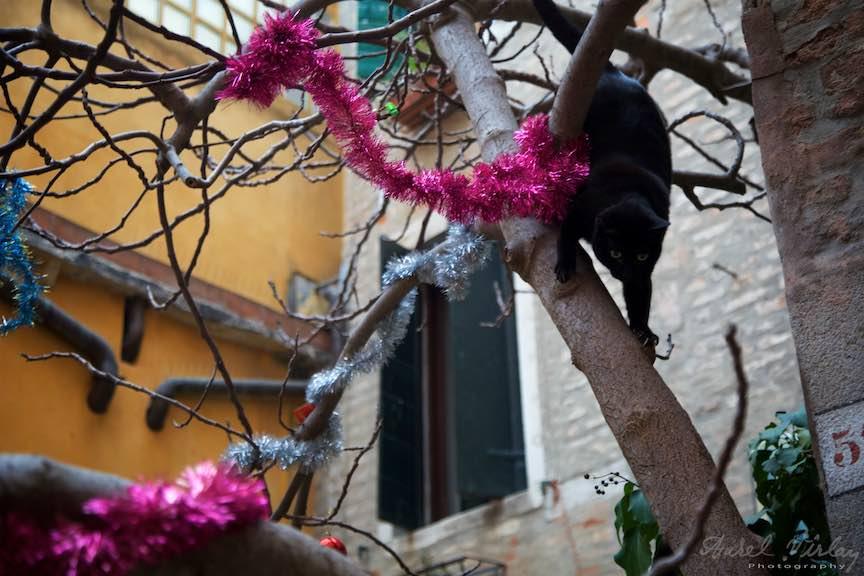 Venetia-Italia-Strazi-cladiri-vechi-canale-gondolieri-FotografAurelVirlan-Emails93