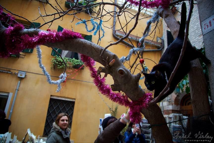 Venetia-Italia-Strazi-cladiri-vechi-canale-gondolieri-FotografAurelVirlan-Emails94