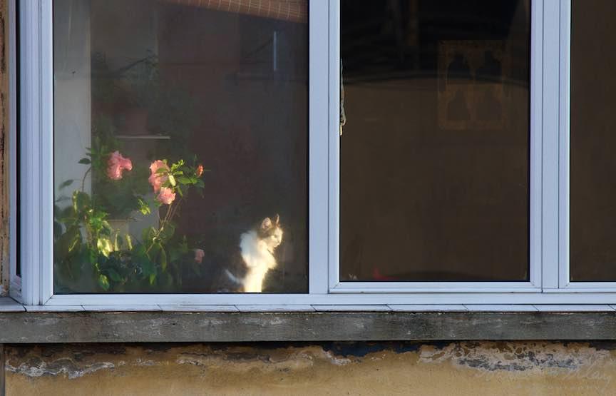 Dimineata devreme: Fotograf paparazzi la pisica vecinului de vis-a-vis.