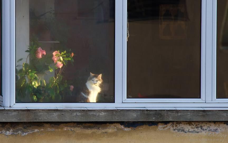 Dimineata-devreme-pisica-floare-rox-lumina-laterala-soare_Foto_AurelVirlan-Emails2