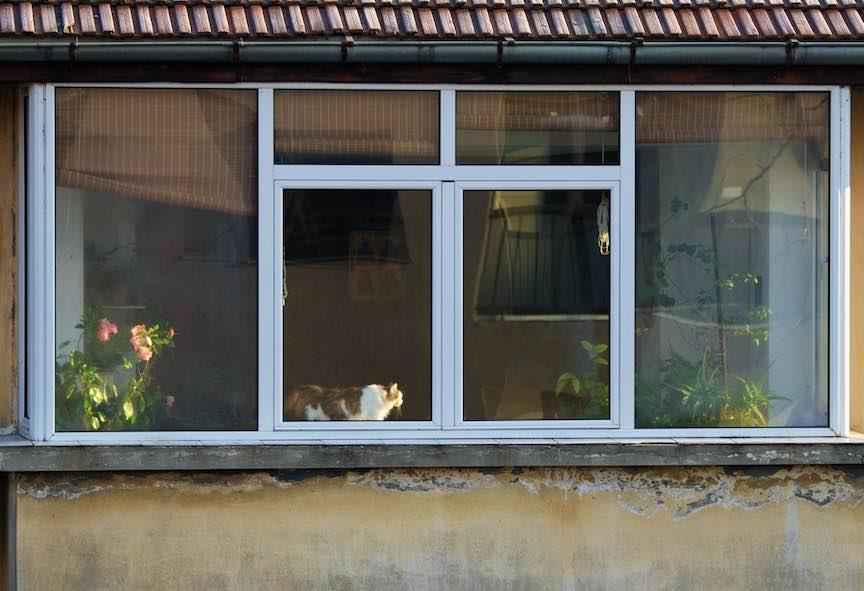 Dimineata-devreme-pisica-floare-rox-lumina-laterala-soare_Foto_AurelVirlan-Emails4