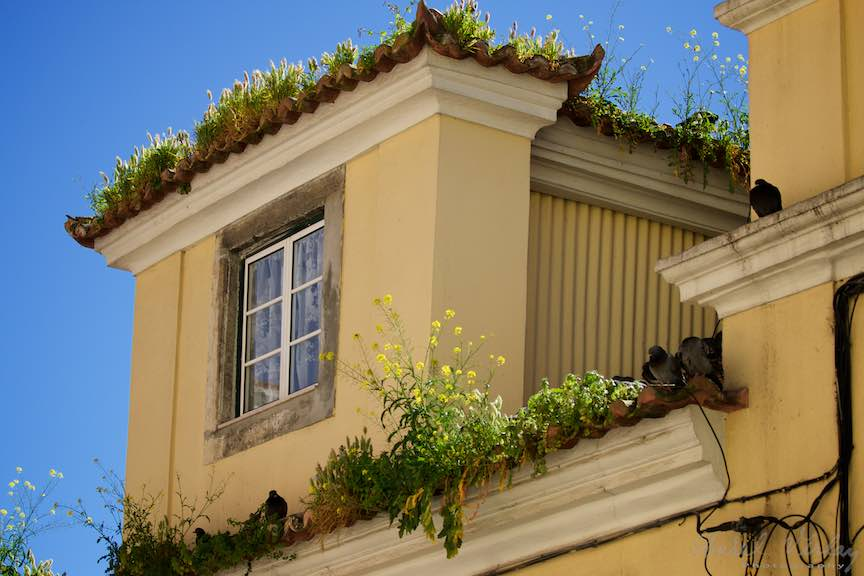 Lisabona_Portugalia-Peisaje-Portrete-Instantanee-Foto_Aurel-Virlan-Emails100
