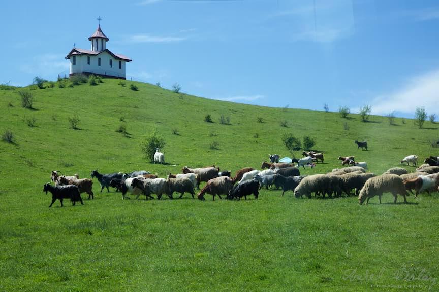 Pelerinaje-Valea-Plopului-2016_Foto-Aurel-Virlan_Emails123