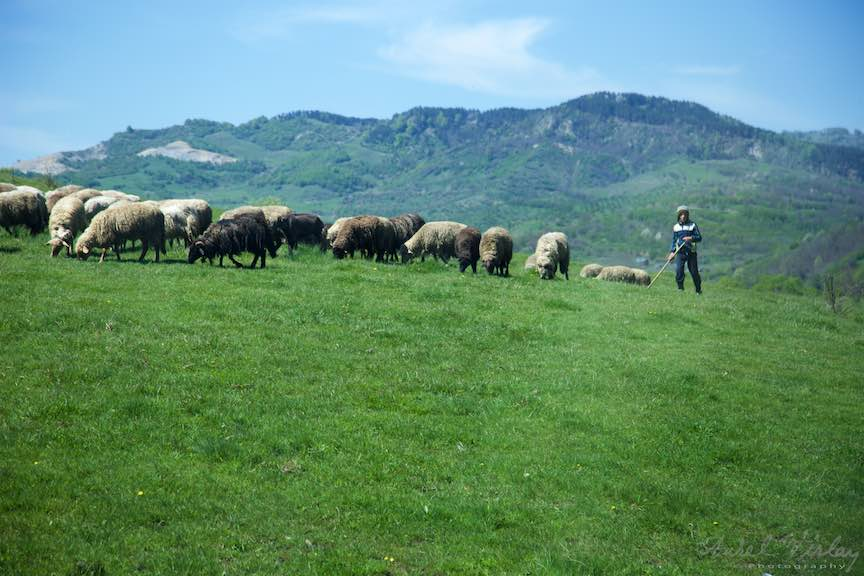 Pelerinaje-Valea-Plopului-2016_Foto-Aurel-Virlan_Emails125