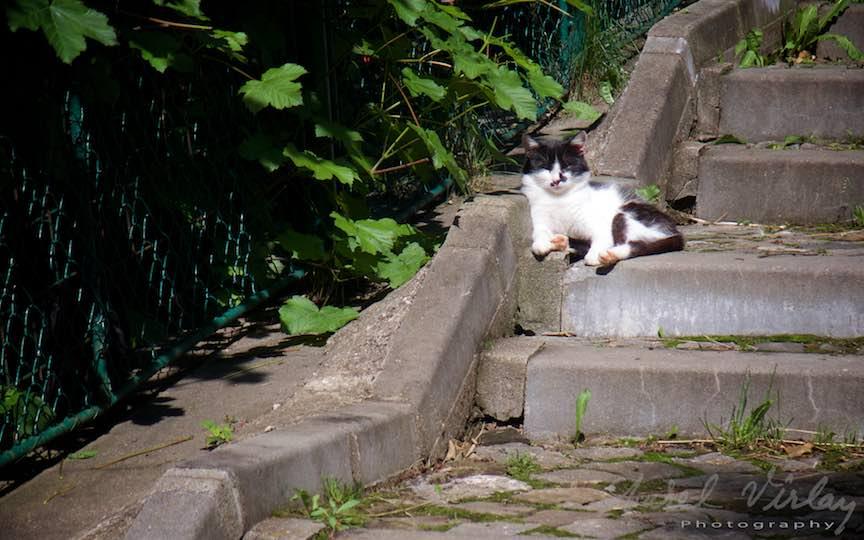 01-Pisica-alb-negru-trepte-Soare-Sinaia_Fotografie-Aurel-Virlan