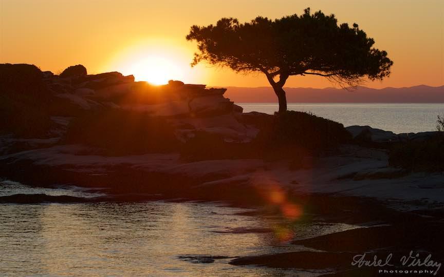 05-Grecia-pinul-siguratic-Voruvourou-rasarit-soare_Fotografie-Aurel-Virlan
