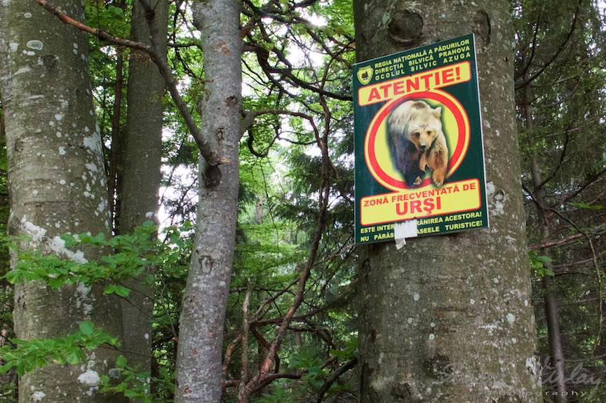 14-Atentie-zona-frecventata-de-ursi-Poiana-Stanii-Regale_Fotografie-Aurel-Virlan