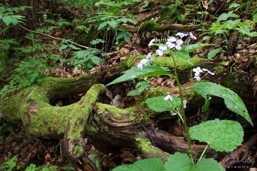 15-muschi-verde-radacini-copaci-padure-Sinaia_Fotografie-Aurel-Virlan