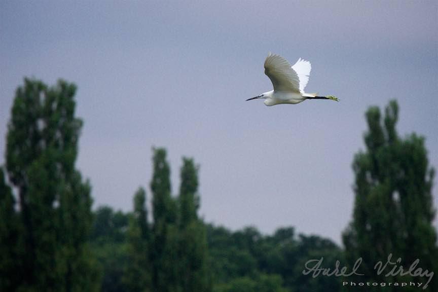 Lacul-Snagov_Foto-Aurel-Virlan-Emails1