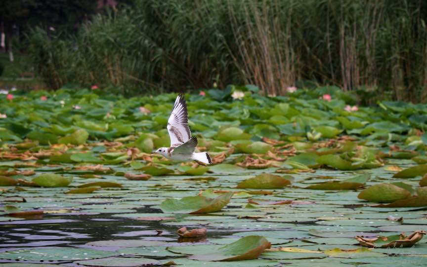 Lacul-Snagov_Foto-Aurel-Virlan- Pescarusul.