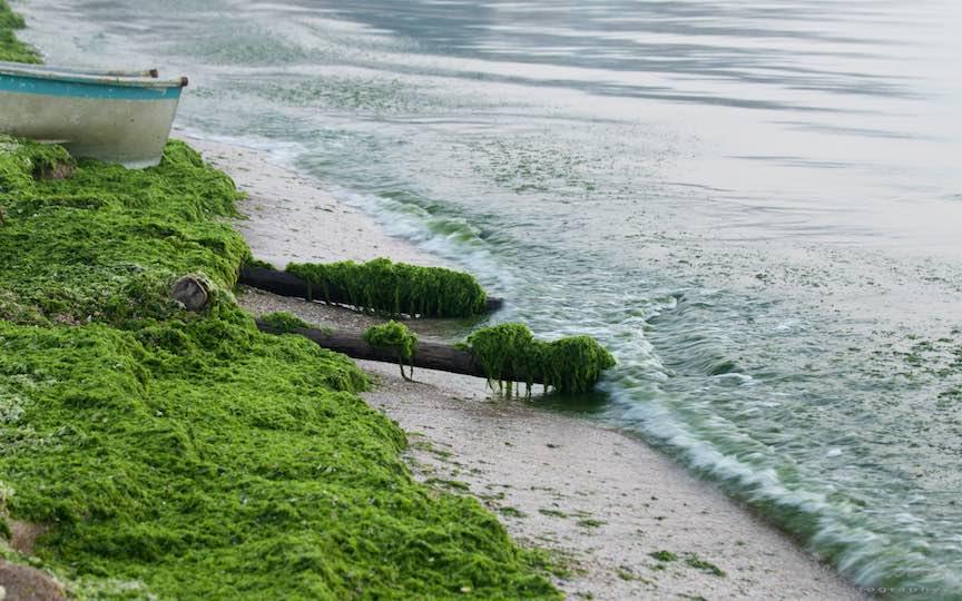 06-Vama-Veche-busteni-pentru-lotca-alge-verzi-marea-negra-Fotografie-Aurel-Virlan