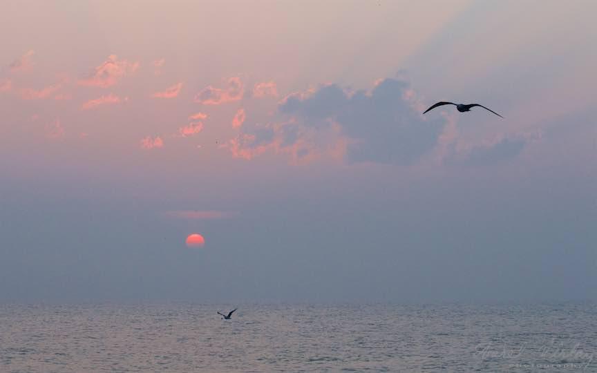 08-Vama-Veche-pescarusi-rasarit-soare-Fotografie-Aurel-Virlan