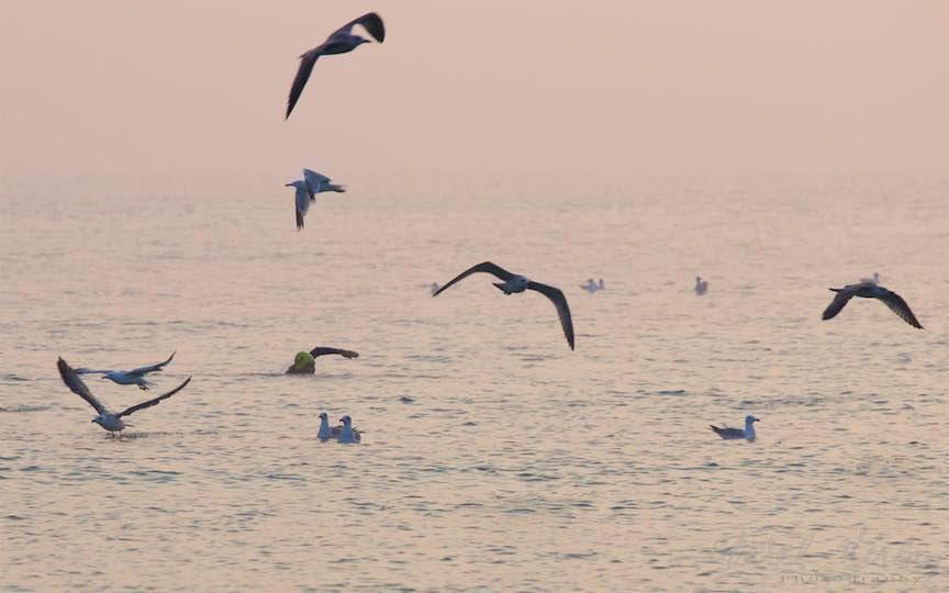 14-Vama-Veche-innot-Pescarusi-dimineata-devreme-Fotografie-Aurel-Virlan