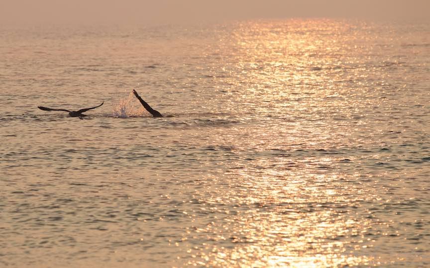 15-Vama-Veche-Pescarusul-innotatorul-rasarit-soare-Fotografie-Aurel-Virlan