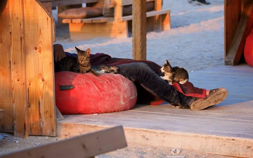 19-Vama-Veche-Romania_pisicute-jucause-tip-dormind-plaja-stuf-rasarit-soare-Fotografie-Aurel-Virlan