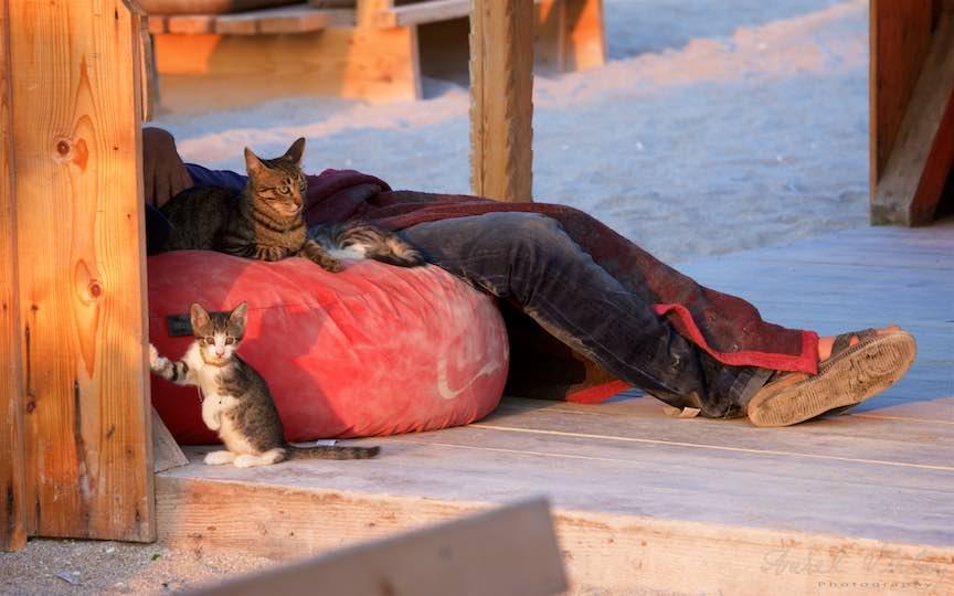 20-Vama-Veche-Romania_pisicutele-jucause-tanar-dormind-saltea-rosie-barul-stuf-rasarit-soare-Fotografie-Aurel-Virlan