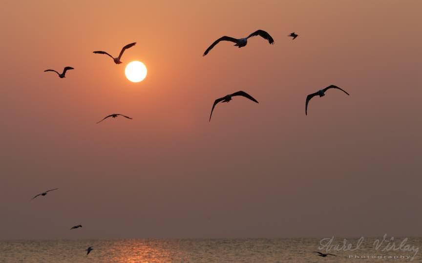 21-Vama-Veche-printre-pescarusi-rasarit-soare-Fotografie-Aurel-Virlan