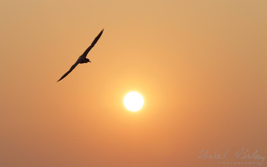 22-Vama-Veche-Pescarusul-rasarit-soare-Fotograf-Aurel-Virlan