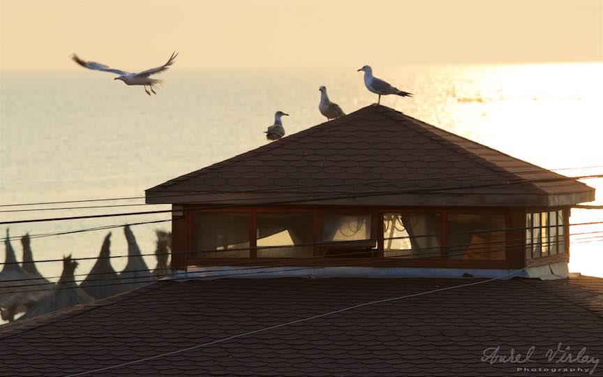 26-Vama-Veche-Pescarusi-rasarit-soare-acoperis-sasha-Fotograf-Aurel-Virlan