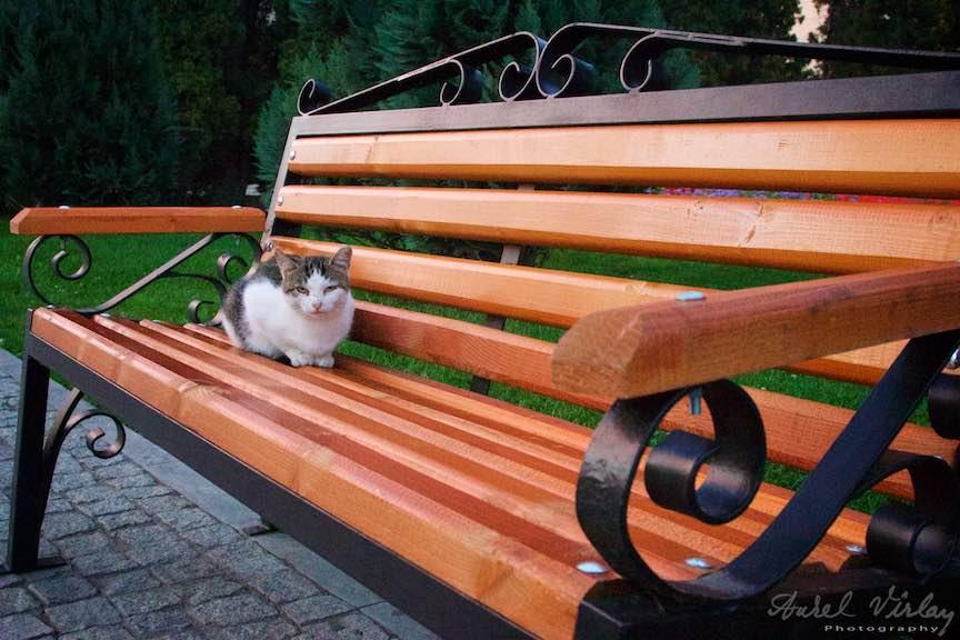 30-pisica-pe-banca-iasi-romania_fotograf-aurel-virlan