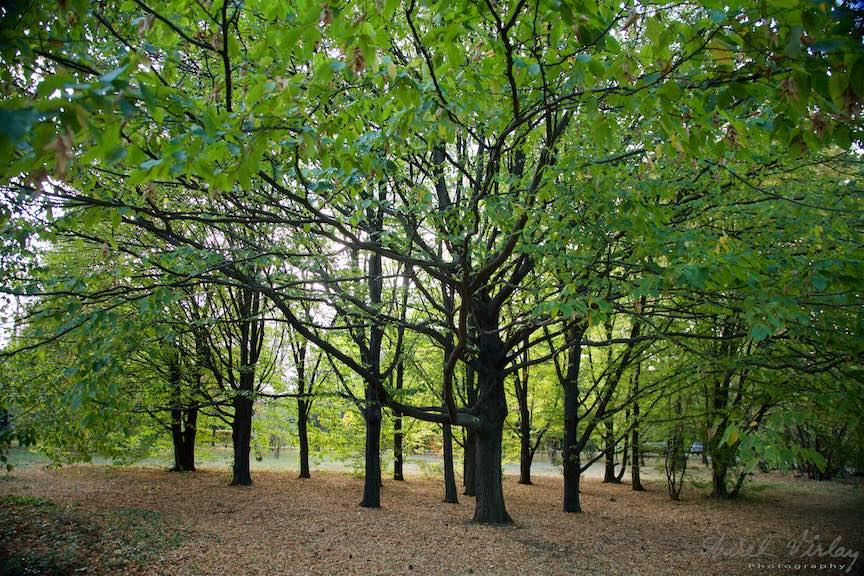 42-copaci-gradina-botanica-iasi-romania_fotograf-aurel-virlan