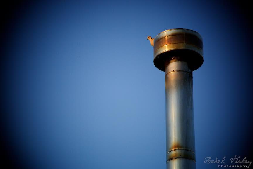 Fotografie Eseu: Viata in Bucurestiul meu industrial.