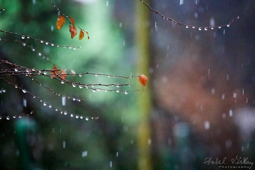 bucuresti-instantanee_foto-aurel-virlan_Sentimente de toamna stropi de ploaie