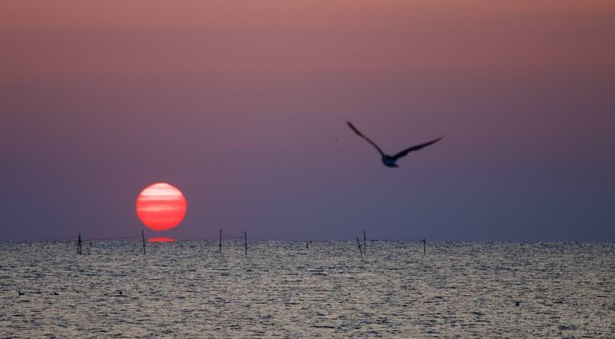 Soarele si pescarusii diminetilor de Vama.